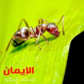 طرق مكافحة النمل