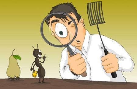 مكافحة الحشرات المنزلية الصراصير و النمل بانواعهم