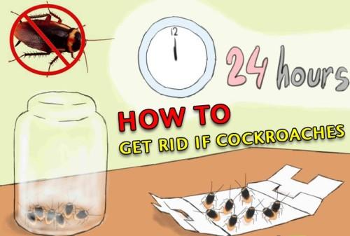 طرق مكافحة الصراصير